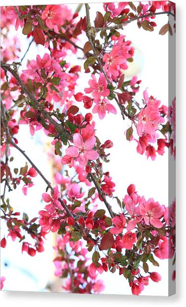 Crabapple Beauty Canvas Print