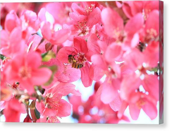 Crabapple Bees 2 Canvas Print