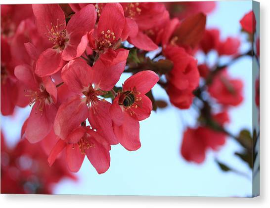 Crabapple Bees Canvas Print