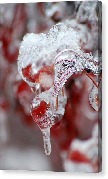Crabapple Berry In Ice Canvas Print by Steven Geer