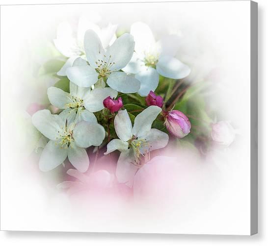 Crabapple Blossoms 3 - Canvas Print
