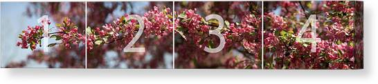 Crabapple In Spring Panoramic Map Canvas Print