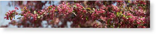 Crabapple In Spring Panoramic Canvas Print