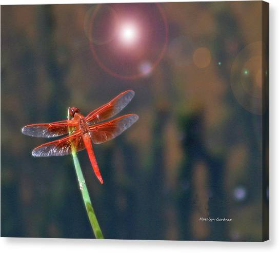 Crackerjack Dragonfly Canvas Print