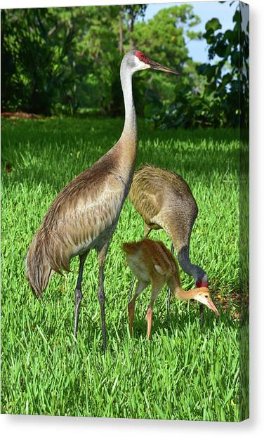 Crane Family Picnic Canvas Print