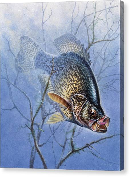 Angling Canvas Print - Crappie Cover Tangle by JQ Licensing