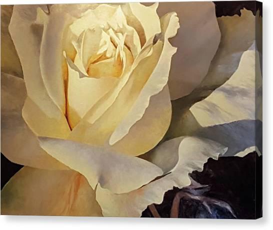 Creamy Rose Canvas Print