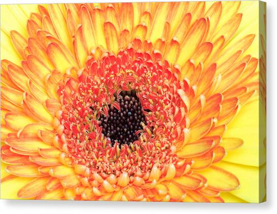 Creation Of A Masterpiece Canvas Print by Pierre Leclerc Photography