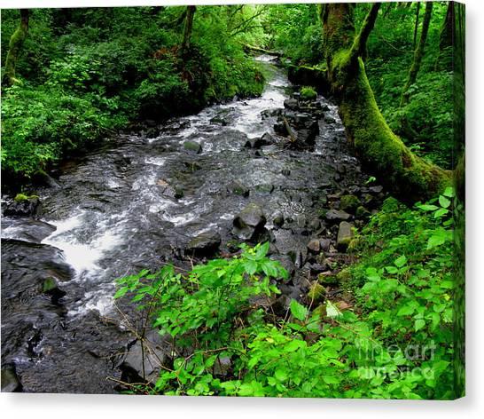 Creek Flow Canvas Print by PJ  Cloud