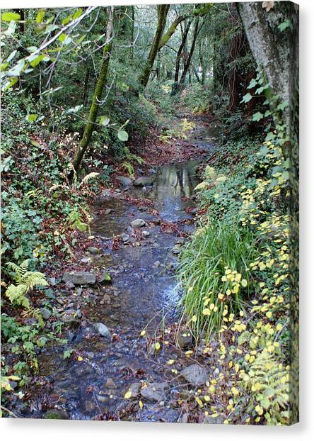 Canvas Print featuring the photograph Creek On Mt Tamalpais 2 by Ben Upham III