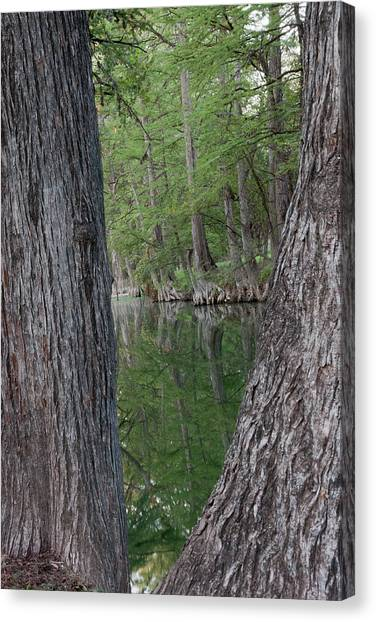 Creek Reflections Canvas Print
