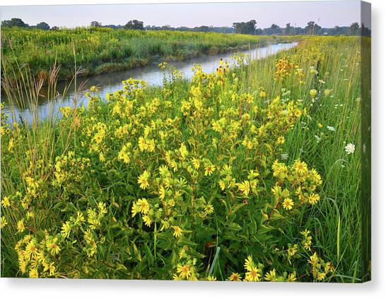 Prairie Sunrises Canvas Print - Creekside Wildflowers In Glacial Park by Ray Mathis