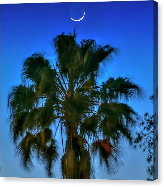 Palm Trees Sunsets Canvas Print - Crescent Over Palm by Marvin Spates