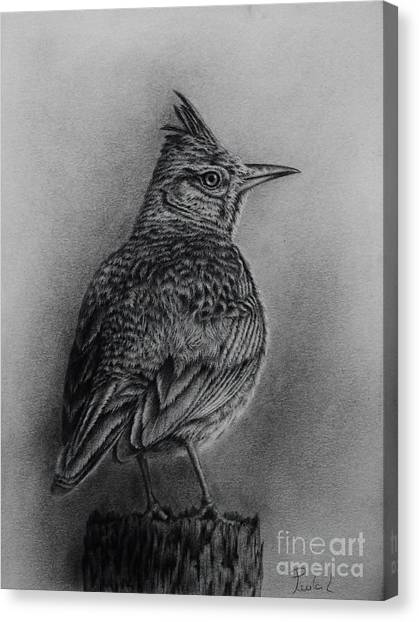 Crested Lark  Canvas Print