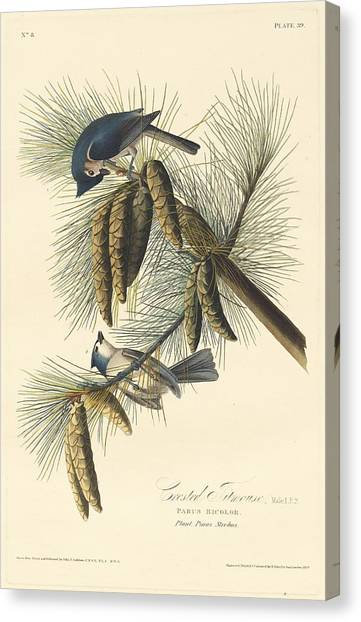Titmouse Canvas Print - Crested Titmouse by Dreyer Wildlife Print Collections