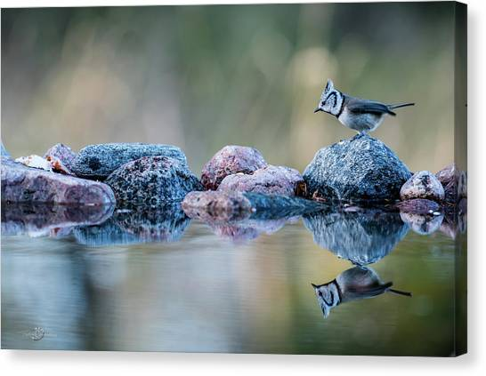 Crested Tit's Reflection Canvas Print