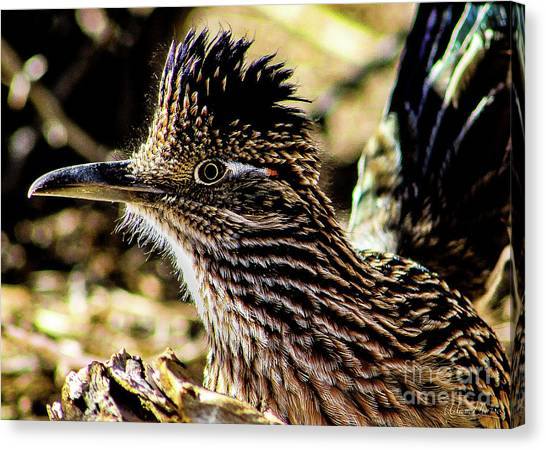 Cresting Roadrunner Canvas Print