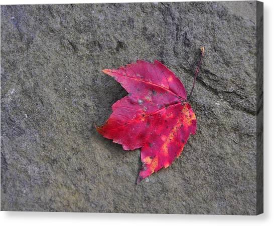 Crimson Canvas Print by JAMART Photography