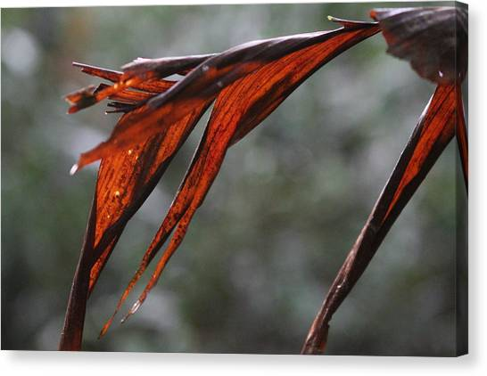 Crimson Leaf In The Amazon Rainforest Canvas Print