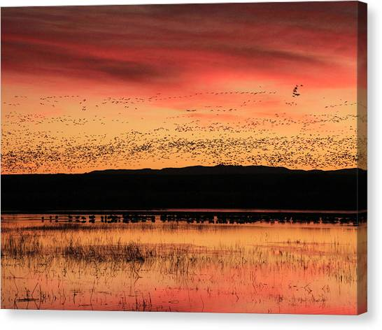 Crimson Sunset At Bosque Canvas Print