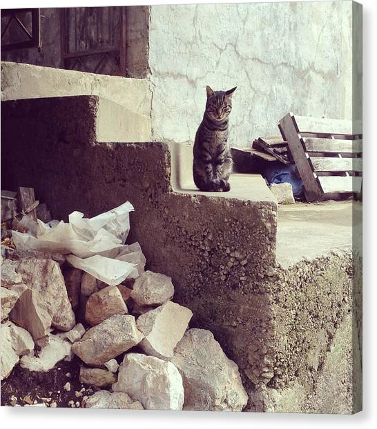Croatian Cat Canvas Print