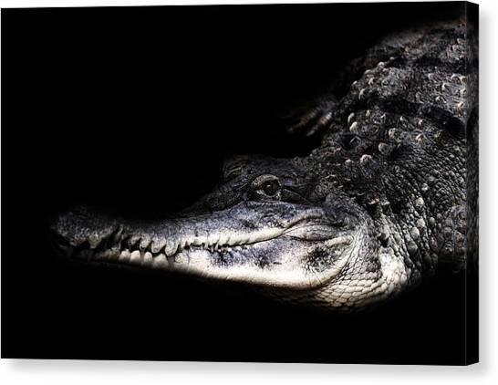 Crocodiles Canvas Print - Crocodile by Martin Newman