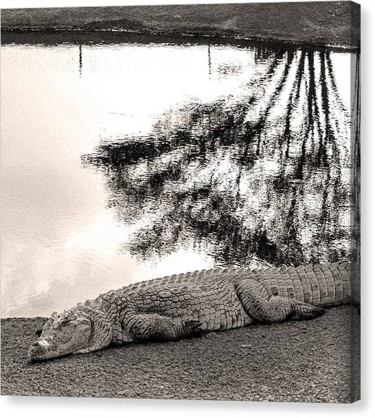 Crocodile Resting Time Canvas Print