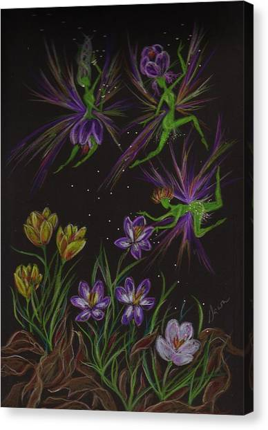 Crocus Canvas Print by Dawn Fairies