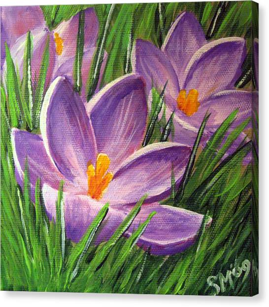 Crocus Canvas Print by Sharon Marcella Marston