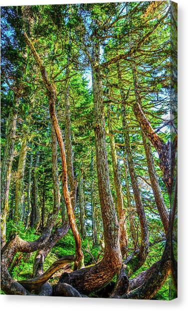 Crooked Trees Of Mt Roberts Canvas Print
