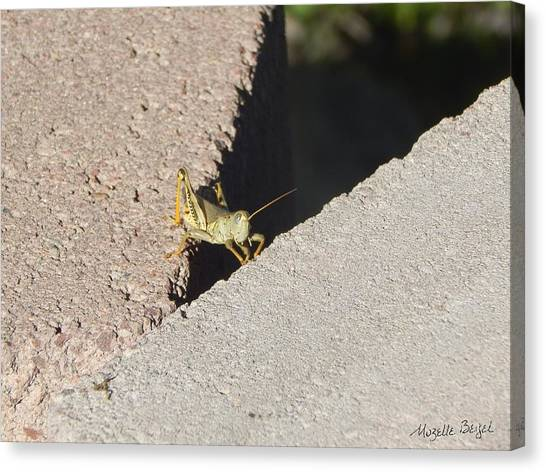 Cross Over Grasshopper Canvas Print