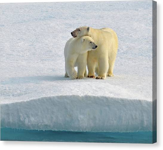 Northwest Territories Canvas Print - Crossing by Tony Beck