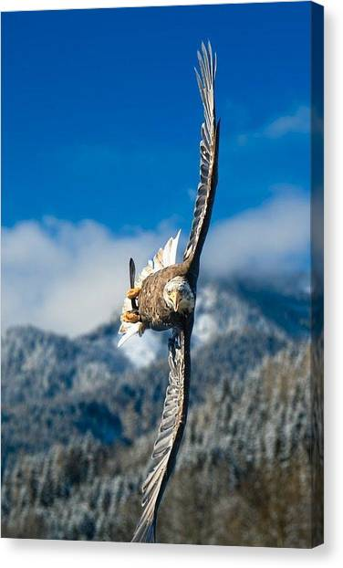 Star Wars Canvas Print - Crosswind Eagle by Andy Bucaille