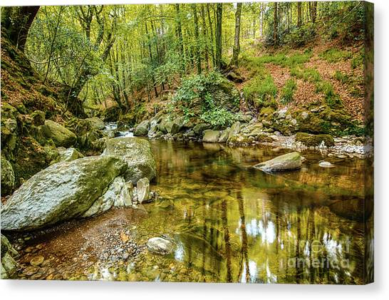 Crough Wood 1 Canvas Print
