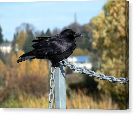 Crow Canvas Print by Anastasia Michaels