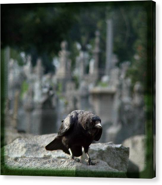 Ravens In Graveyard Canvas Print - Crow In The City Of Stone by Gothicrow Images