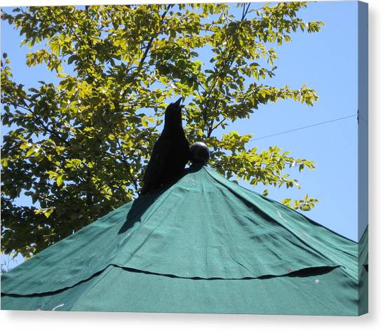 Crow On An Umbrella Canvas Print