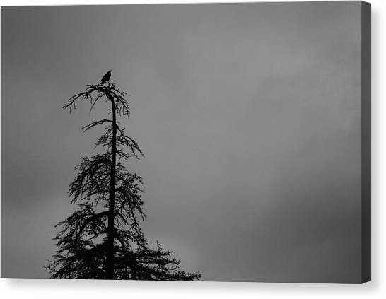Crow Perched On Tree Top - Black And White Canvas Print
