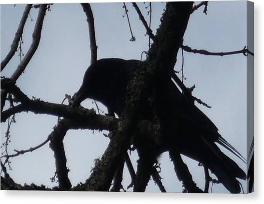 Crow Silouette Canvas Print by Dawna Raven Sky