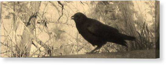 Crow Canvas Print by Tracy Fallstrom