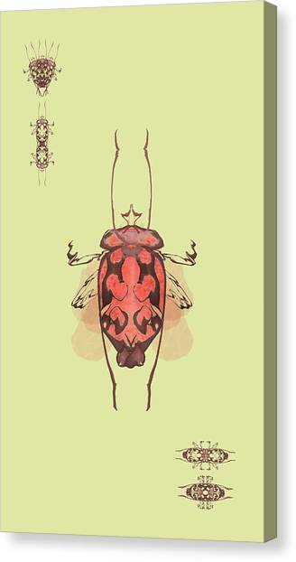 Crowned Horn Bug Specimen Canvas Print