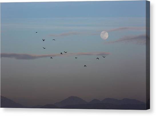 Crows Coming Home To Roost Canvas Print by Robin Street-Morris