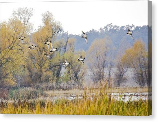 Cruising The Pond Canvas Print by Charlie Osborn