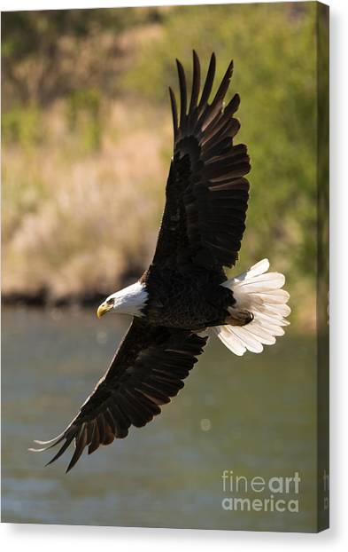 Avian Canvas Print - Cruising The River by Mike Dawson