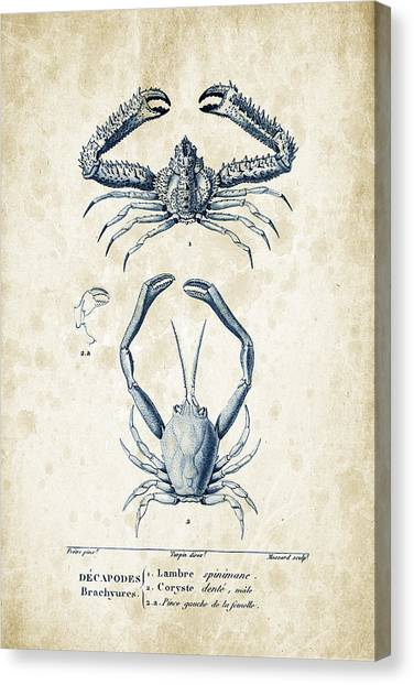 Shrimping Canvas Print - Crustaceans - 1825 - 01 by Aged Pixel