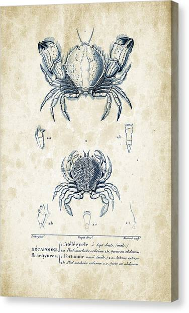 Shrimping Canvas Print - Crustaceans - 1825 - 02 by Aged Pixel