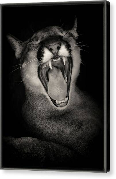 Canvas Print featuring the photograph Cruz Yawning by Elaine Malott