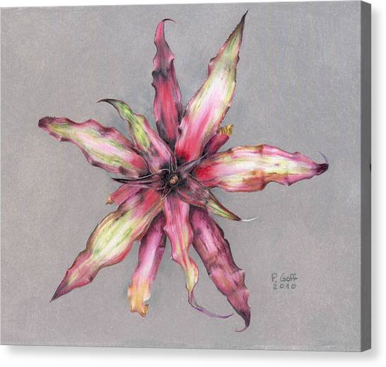 Cryptanthus Strawberry Shortcake Canvas Print