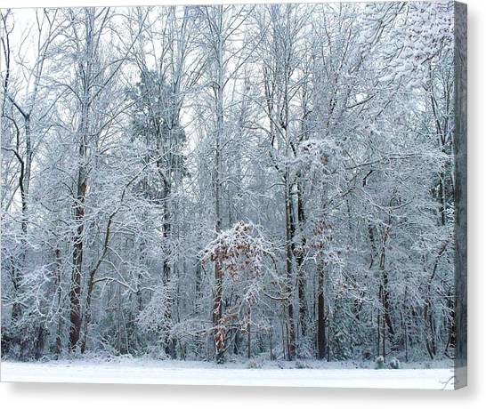 Crystal Forest Canvas Print by Jeanette Stewart