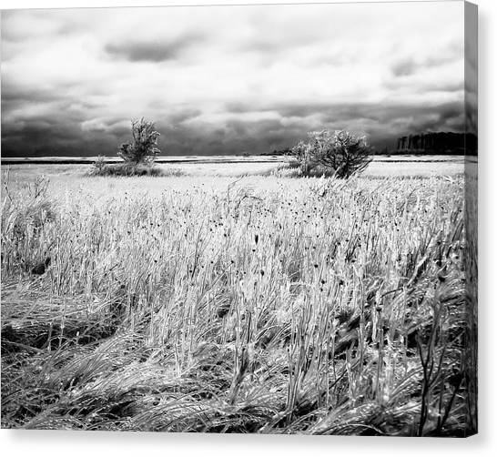 Crystal Grass Canvas Print